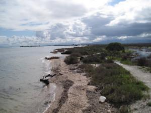 coastal IMG_5170