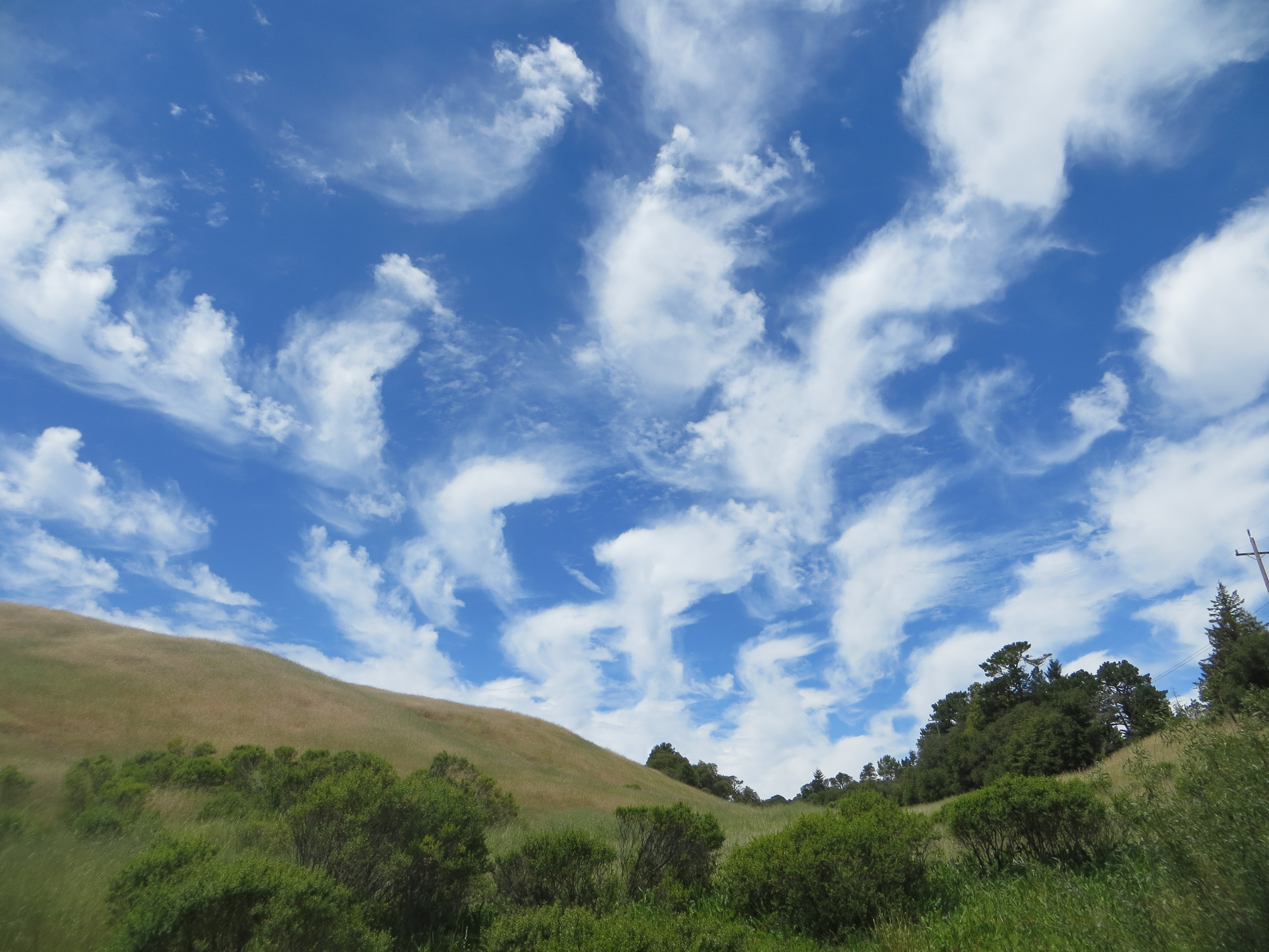 Quality Day Trip for Kids: Russian Ridge Open Space Preserve