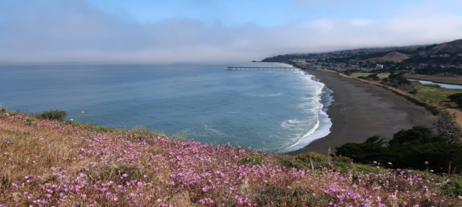 Weekend Recharge: Mori Point Flowers, Whales, & Fog Trailrun